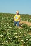 Tobias blomst Holgers Jordbaer
